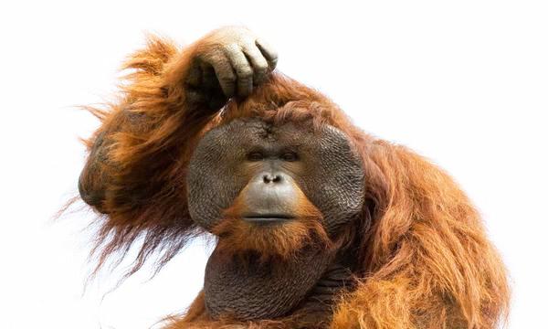 monkey-pregunta-bis